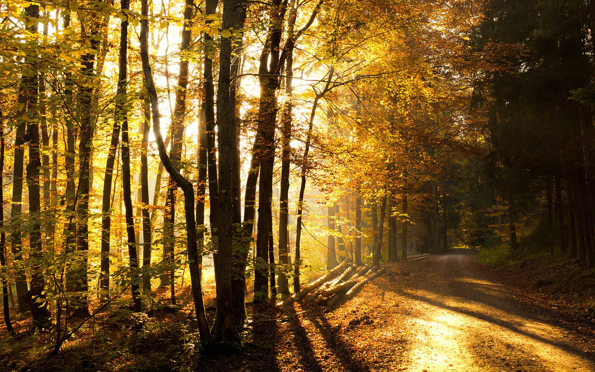 Forest Hd Theme Free Download Wallpaper - Beautiful Forest Road , HD Wallpaper & Backgrounds