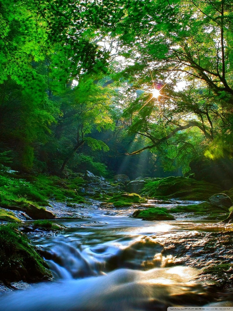 Ipad 1/2/mini - Beautiful View Of A Forest , HD Wallpaper & Backgrounds