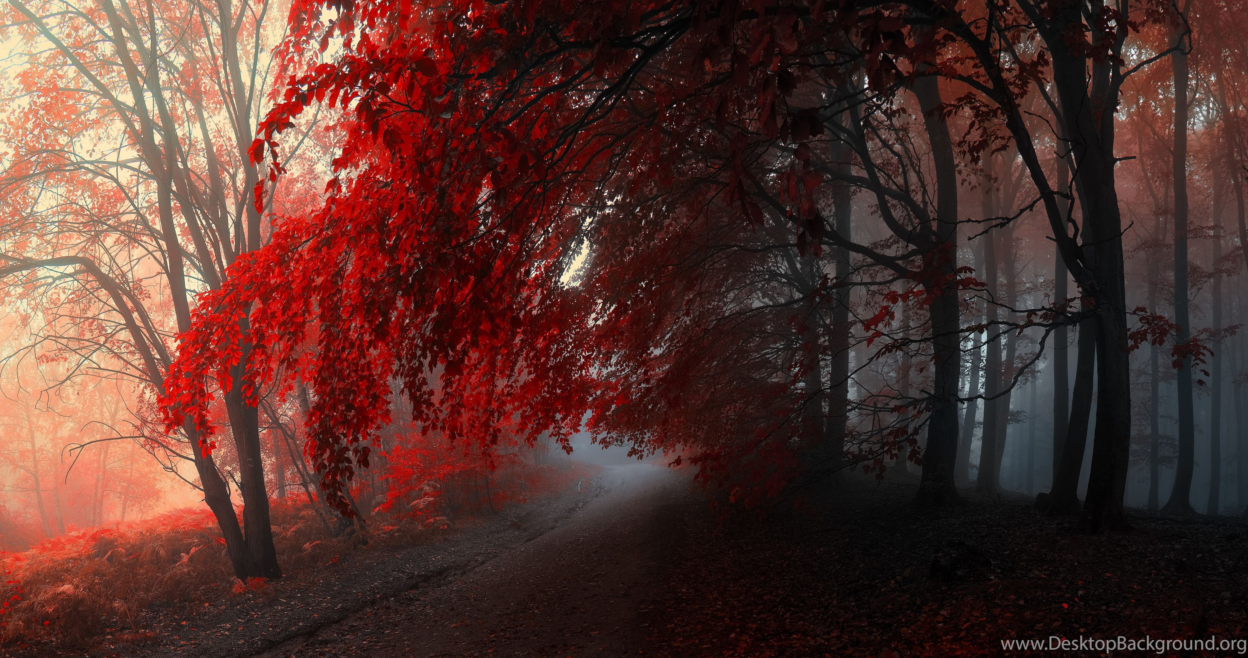 Autumn Red Forest Hd Wallpaper - Islam Quotes About Revenge , HD Wallpaper & Backgrounds