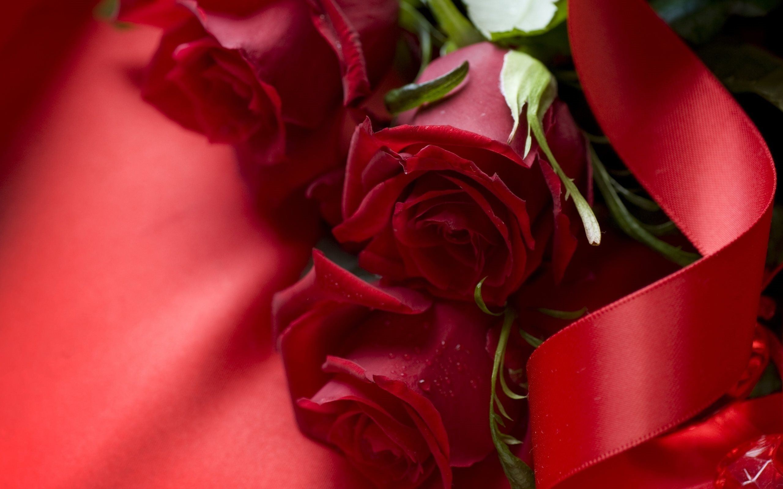 Download Wallpapers Romantic Background, Red Roses, - Rose Beautiful Wallpaper Downloaded , HD Wallpaper & Backgrounds