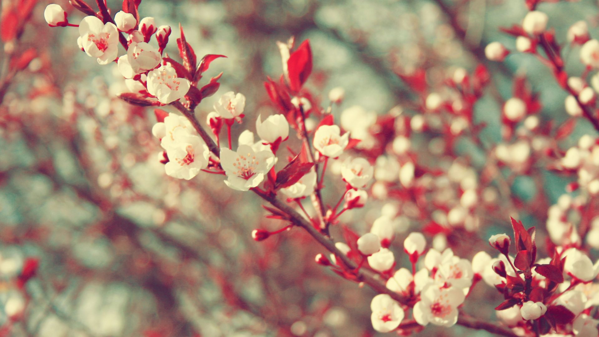 Wallpaper Tumblr Vintage For Iphone Awesome Spring 1063494
