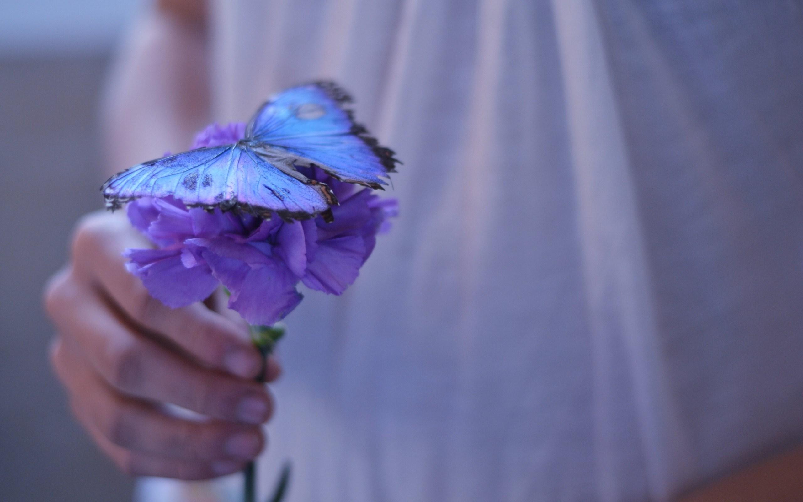 Flower Purple Butterfly Girl Mood , HD Wallpaper & Backgrounds