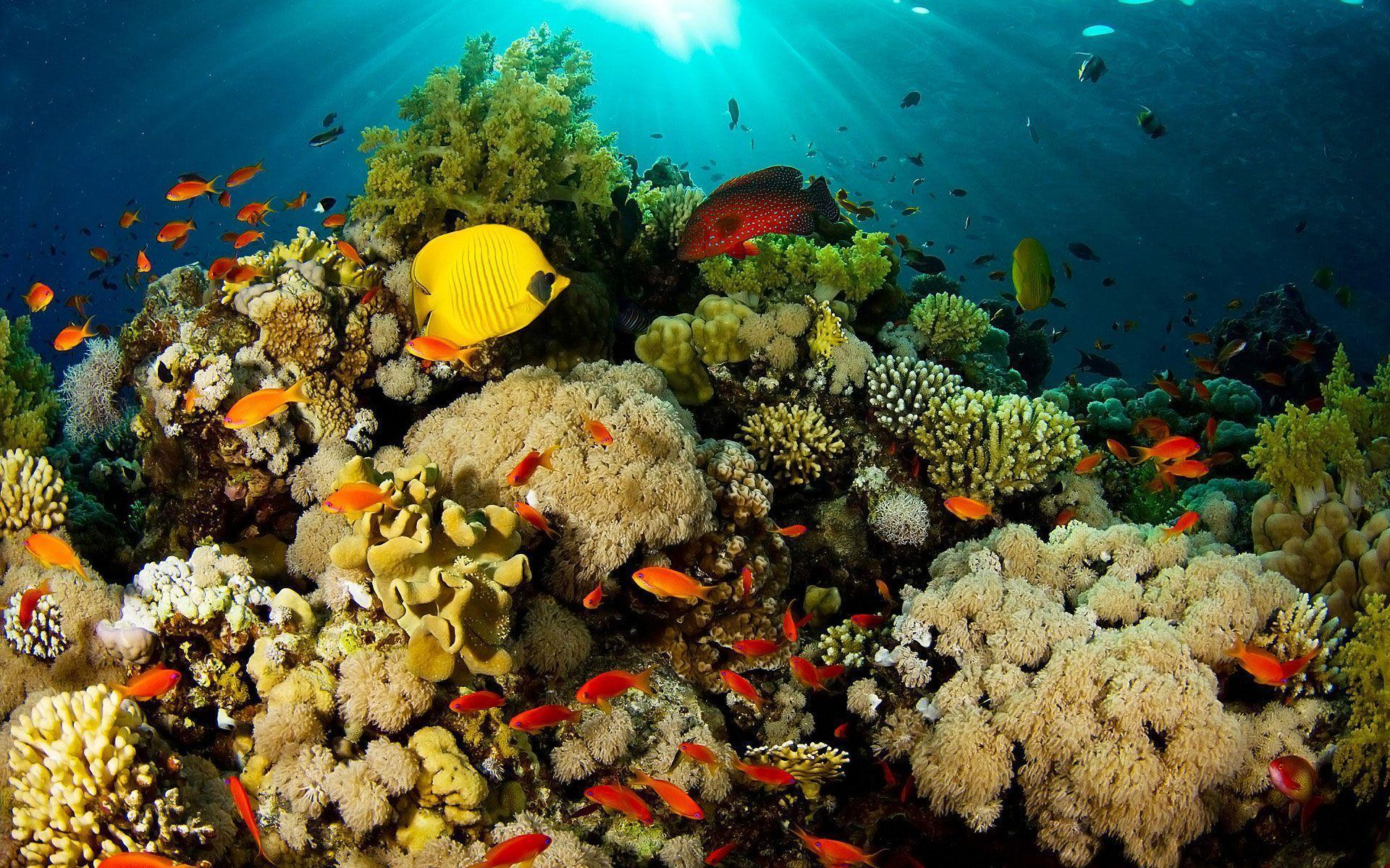 Coral Reef Wallpapers Coral Reef Pictures Hd 1067722 Hd