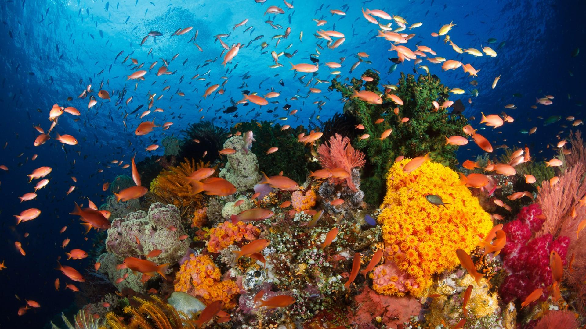 Coral Reef Wallpaper Great Barrier Reef Small 1067944 Hd