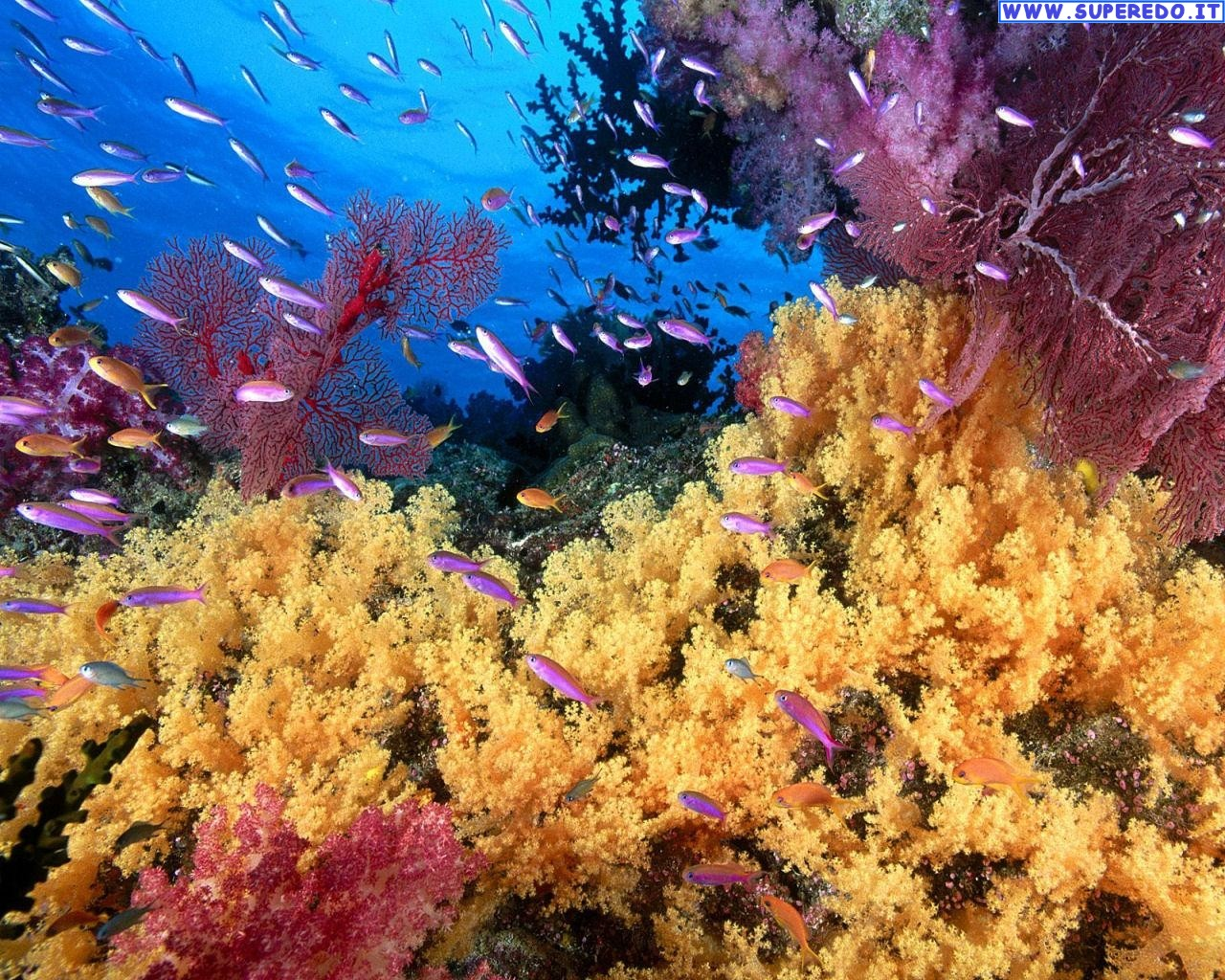 Coral Reef Wallpapers Corals Great Barrier Reef Australia