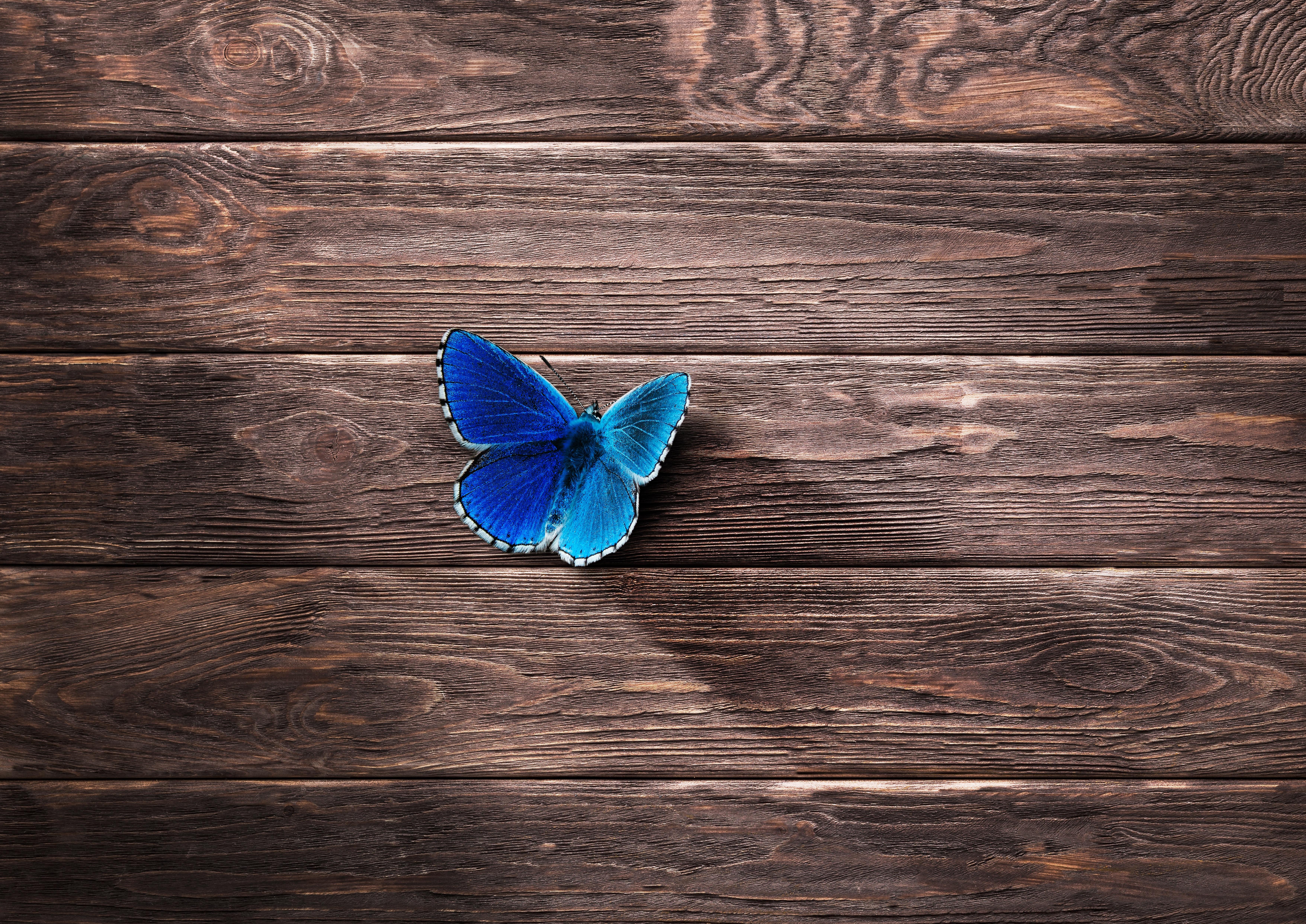 Original Resolution Popular - Desktop Wallpaper Hd Butterfly , HD Wallpaper & Backgrounds