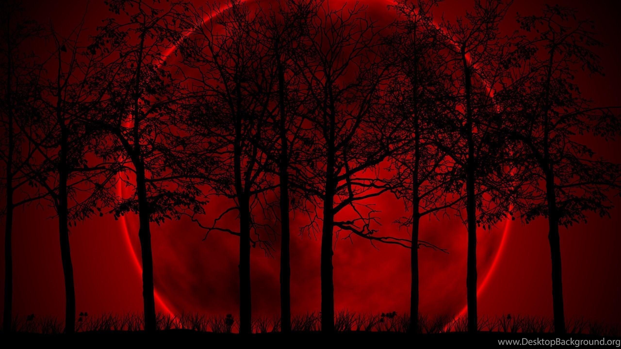 La La La Land - Dark Forest Wallpaper 4k , HD Wallpaper & Backgrounds