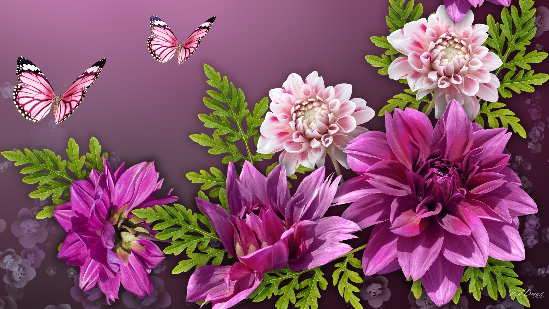 Jasmine Flower Wallpaper Pictures Wallpaper Flowerhdwallpaper - Pink Water Color Floral Butterfly , HD Wallpaper & Backgrounds