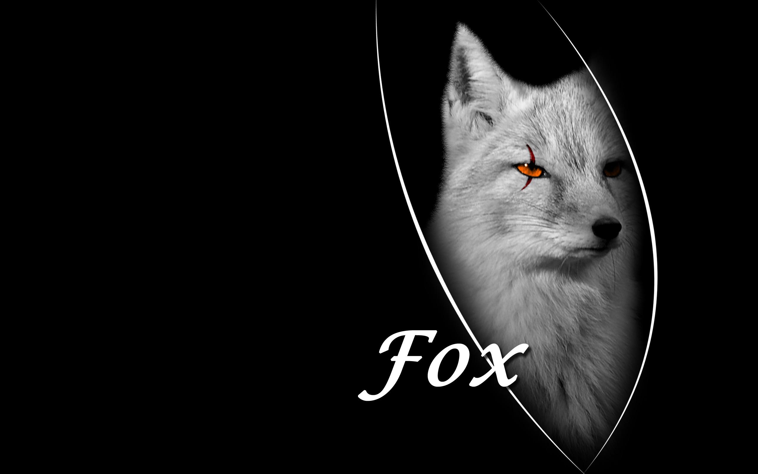 Cool Fox Wallpaper Black Fox 114903 Hd Wallpaper Backgrounds Download