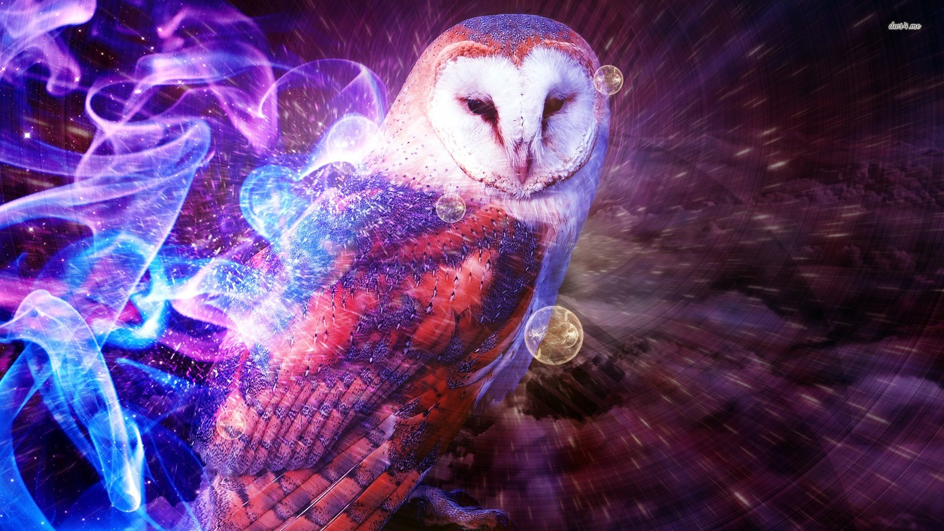 Owl Wallpaper Fantasy Colorful Owl Art 115013 Hd Wallpaper Backgrounds Download