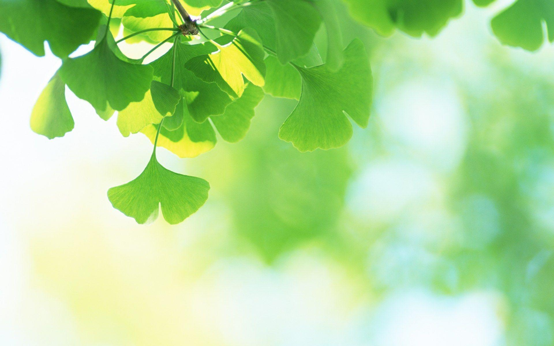 Green Leaves Wallpapers - Green Leave , HD Wallpaper & Backgrounds