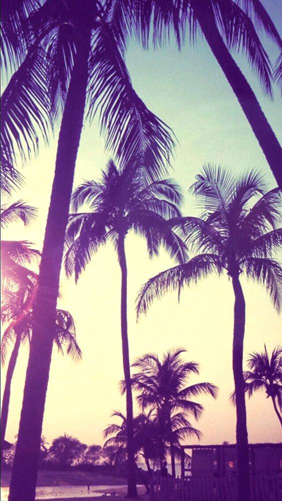 Palm Tree Wallpaper Tumblr - Palm Tree Wallpaper Phone , HD Wallpaper & Backgrounds