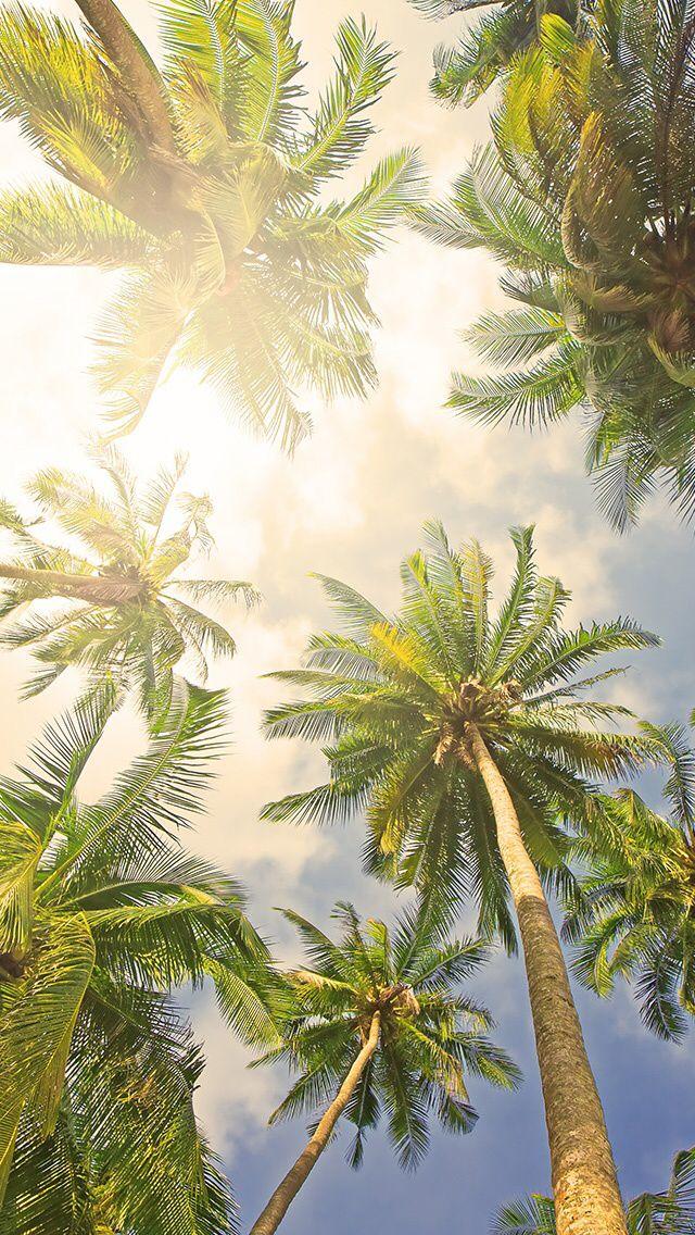 Palm Tree Wallpaper - Palm Tree Wallpaper Iphone , HD Wallpaper & Backgrounds