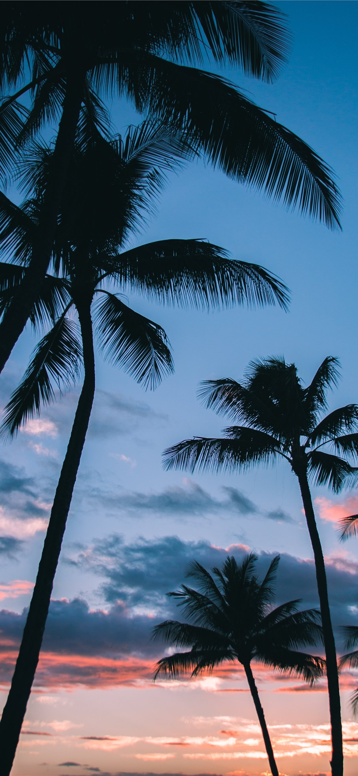 Palm Trees In Paradise Iphone 8 Wallpaper - Palm Tree Wallpaper Iphone X , HD Wallpaper & Backgrounds