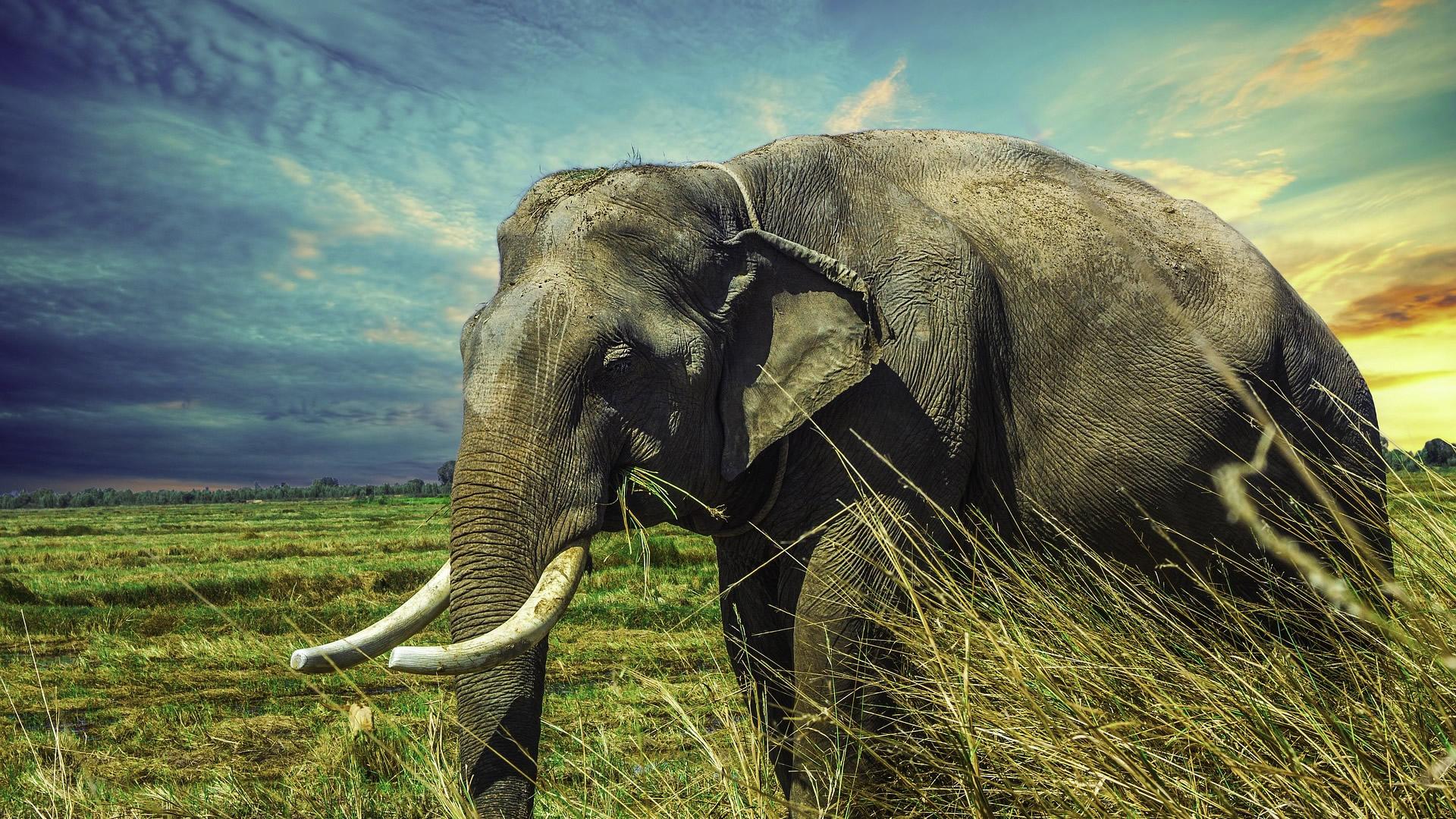 Elephant Wallpaper Elephant Hd HD Wallpaper