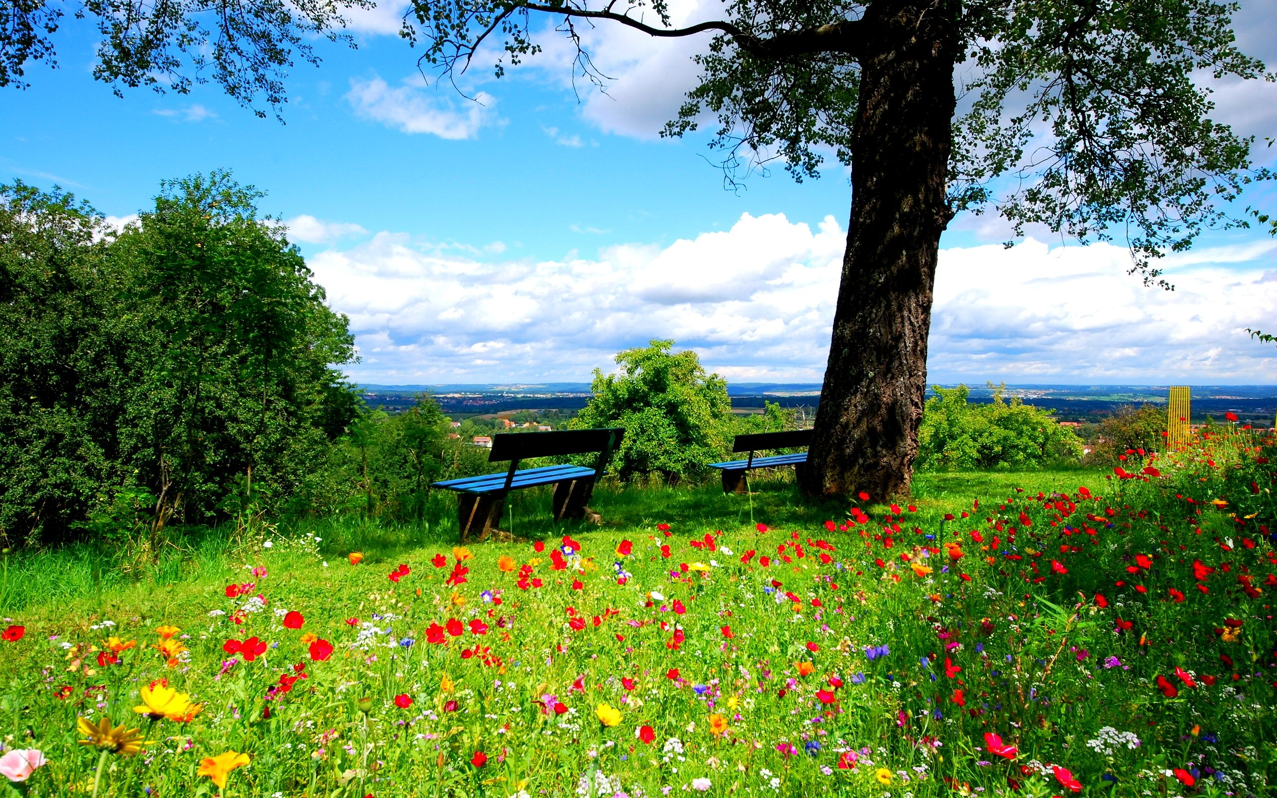 Garden Wallpaper For Android - Beautiful Flowers In Nature , HD Wallpaper & Backgrounds