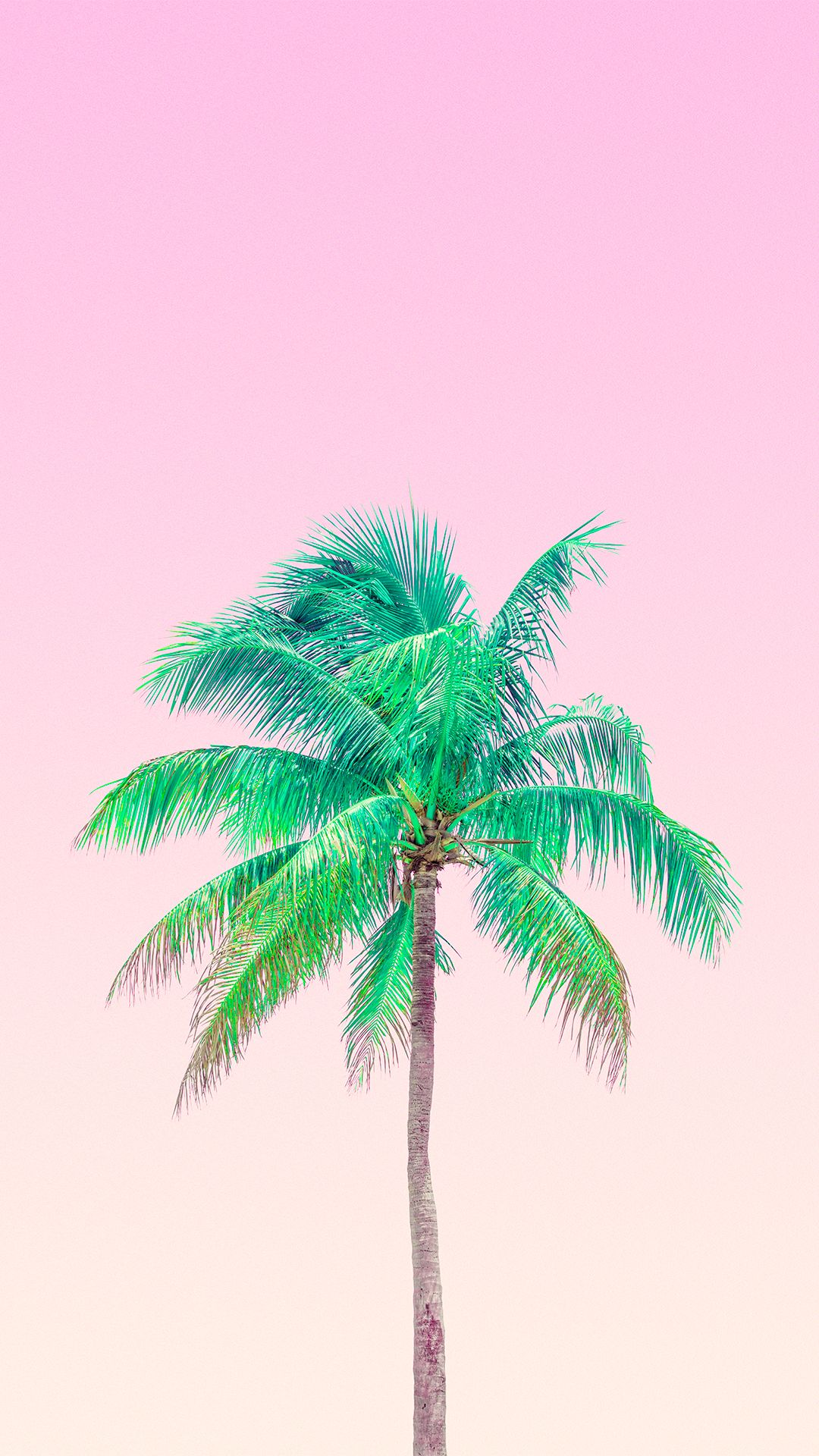 Pink Palm Trees - Summer Background For Iphone , HD Wallpaper & Backgrounds