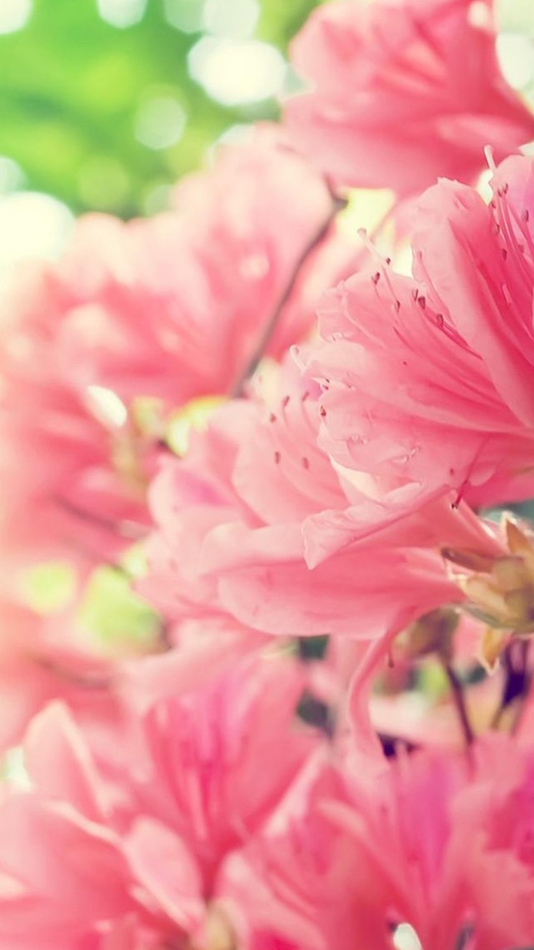 Nature Blossom Flower Bunch Iphone Photos Pretty Profile Pictures Of Flowers 1100259 Hd Wallpaper Backgrounds Download