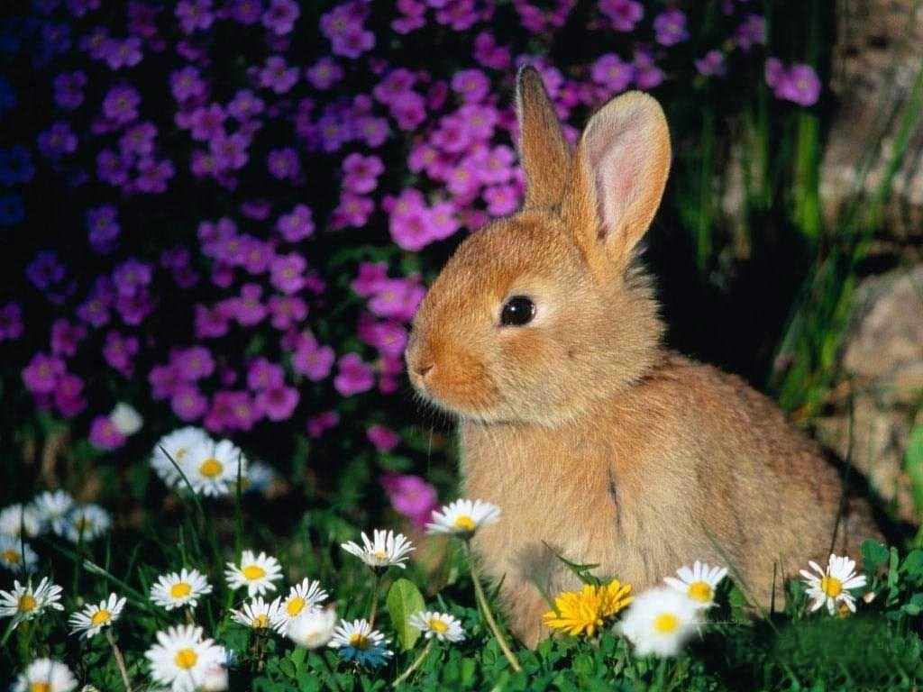 Wallpaper Kelinci Lucu Dan Imut Seen Www Baby Bunnies