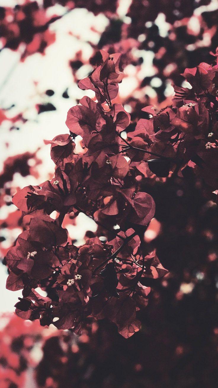 Flower Wallpaper Iphone X (1116161) , HD Wallpaper