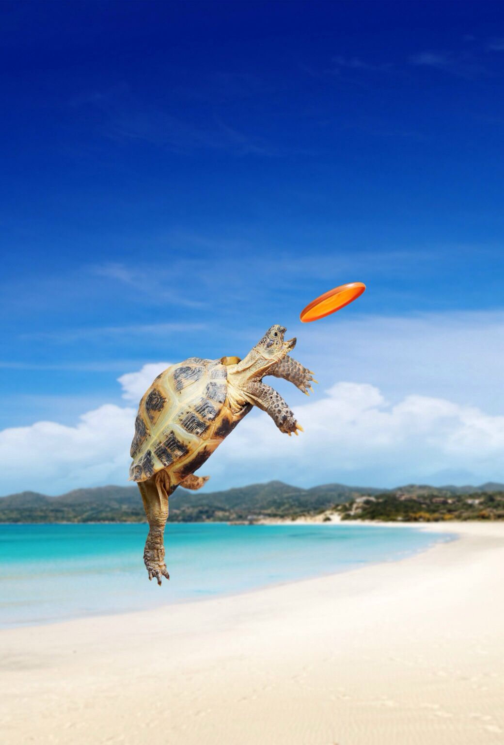 Turtle Catching A Frisbee On A Beach Ios 7 Wallpaper Funny