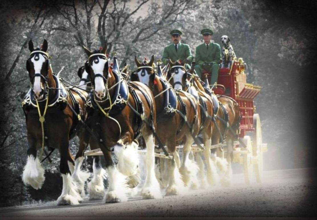 Horses Christmas Clydesdales Budweiser Horse Wallpaper Budweiser Clydesdales Christmas 1129067 Hd Wallpaper Backgrounds Download