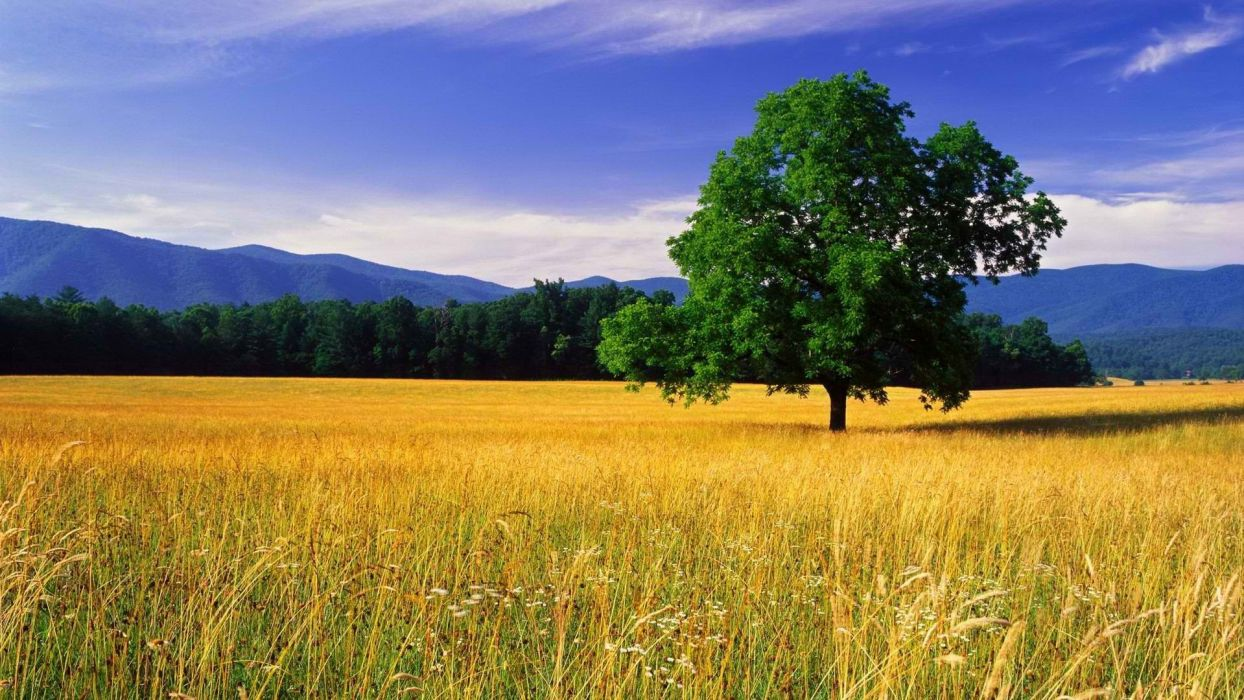 Great Smoky Mountains Usa Ipad Mini Wallpapers Desktop - Landscape Pictures Of Nature , HD Wallpaper & Backgrounds