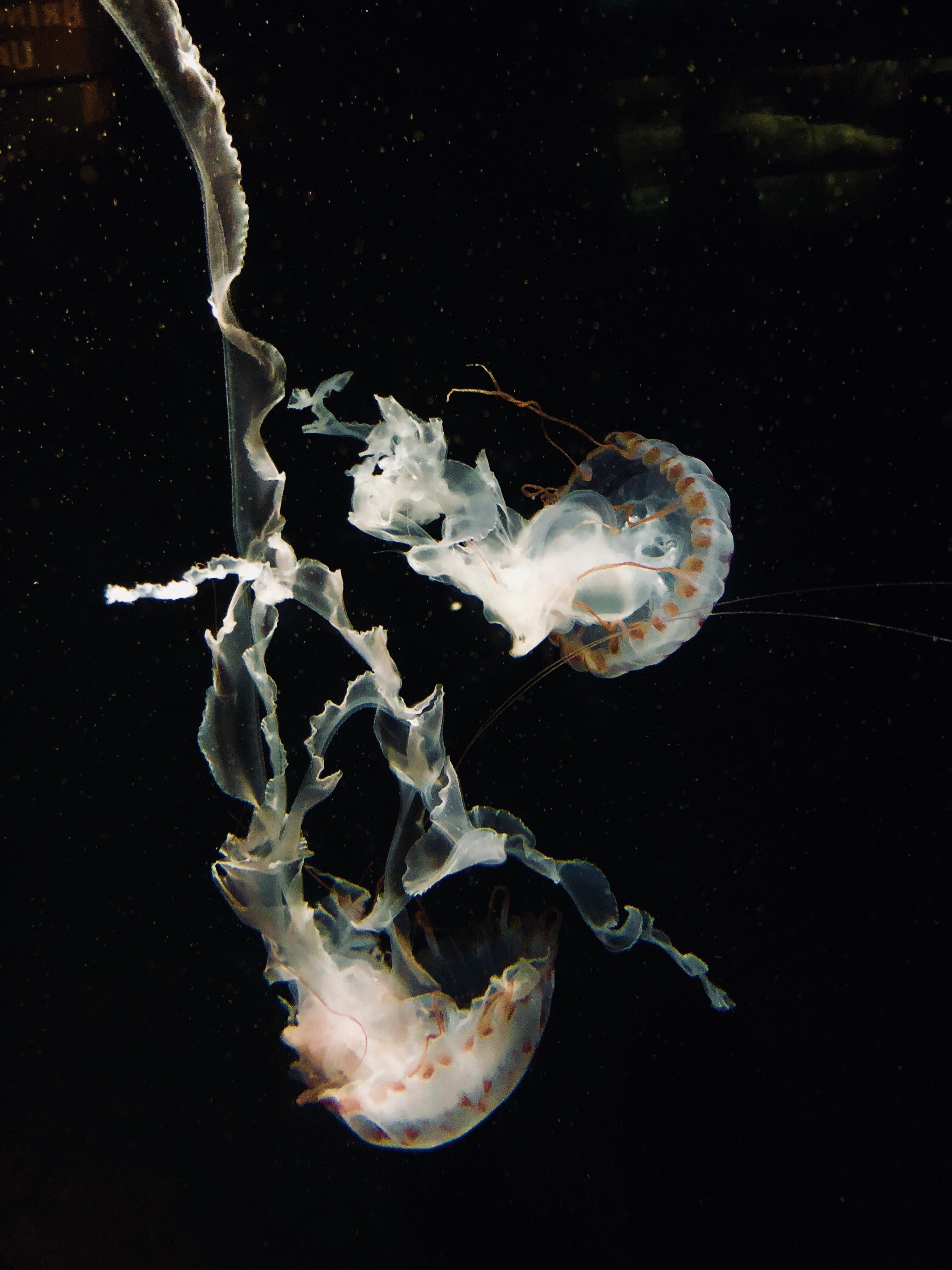 Jelly Fish Wallpaper - Jellyfish , HD Wallpaper & Backgrounds