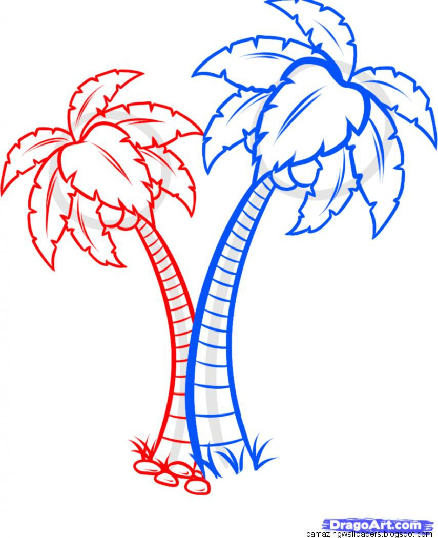 Tropical Rainforest Plants Drawings Coloring Pages - Coloring Pages Palm Tree , HD Wallpaper & Backgrounds
