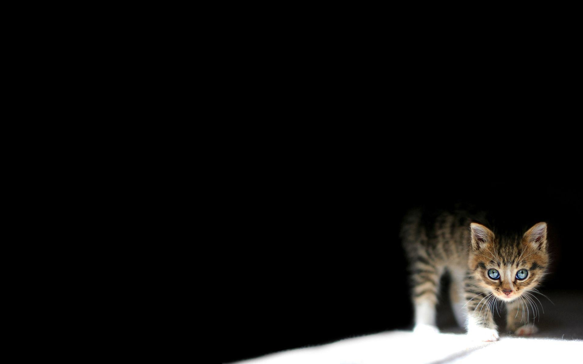 Cat Glasses Htc Hd Wallpaper Kitten Wallpaper Black Background 1172369 Hd Wallpaper Backgrounds Download