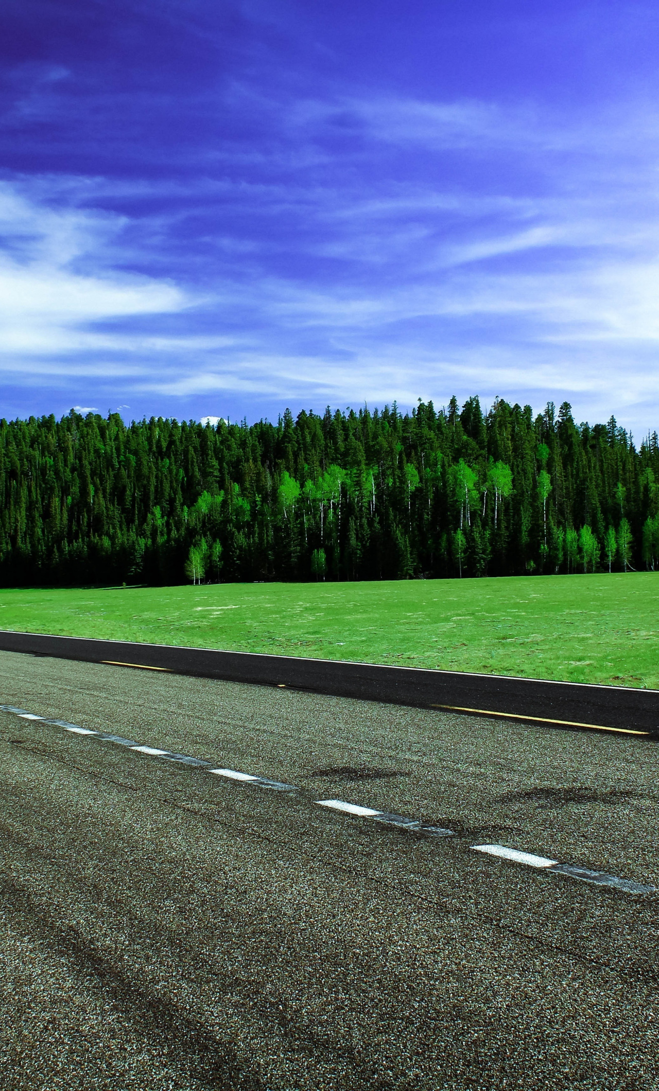 Wallpaper Green Trees Highway Road Sunny Day Freeway