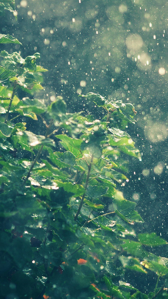 Summer Rainy In Sunny Day Iphone Se Wallpaper - Rain Wallpaper Iphone 6 , HD Wallpaper & Backgrounds