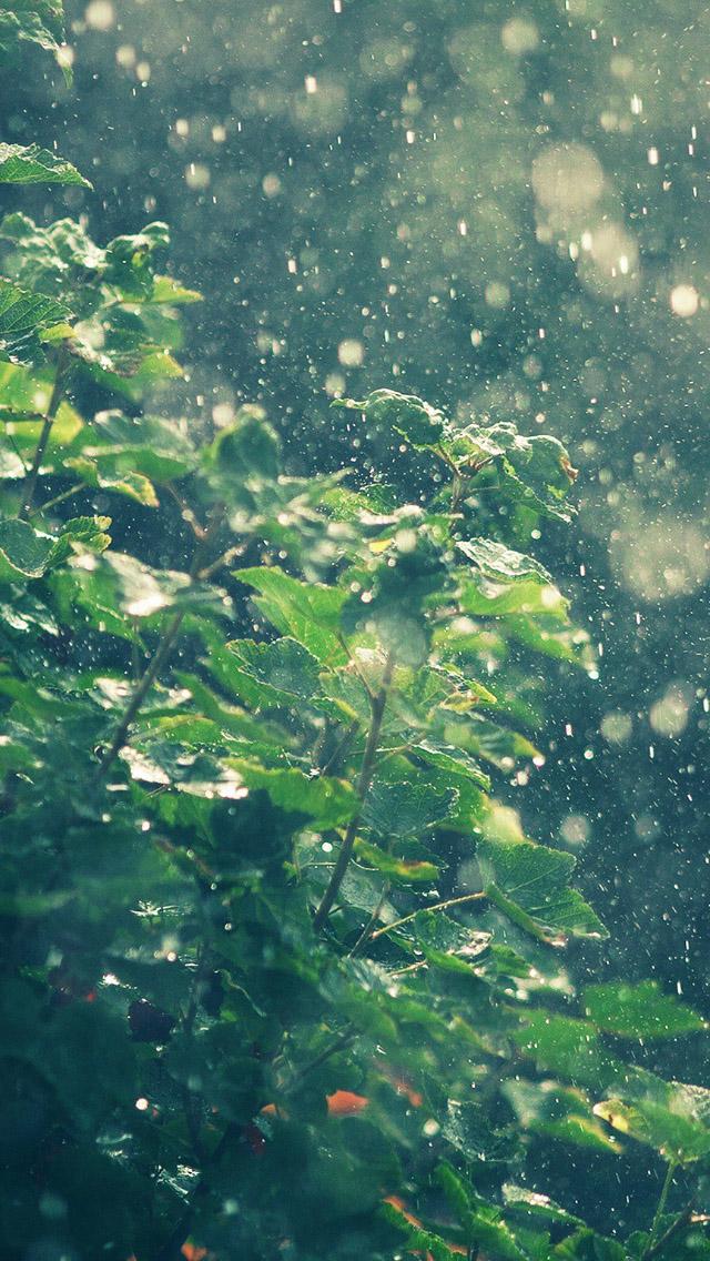 Summer Rainy In Sunny Day Iphone Se Wallpaper Rain
