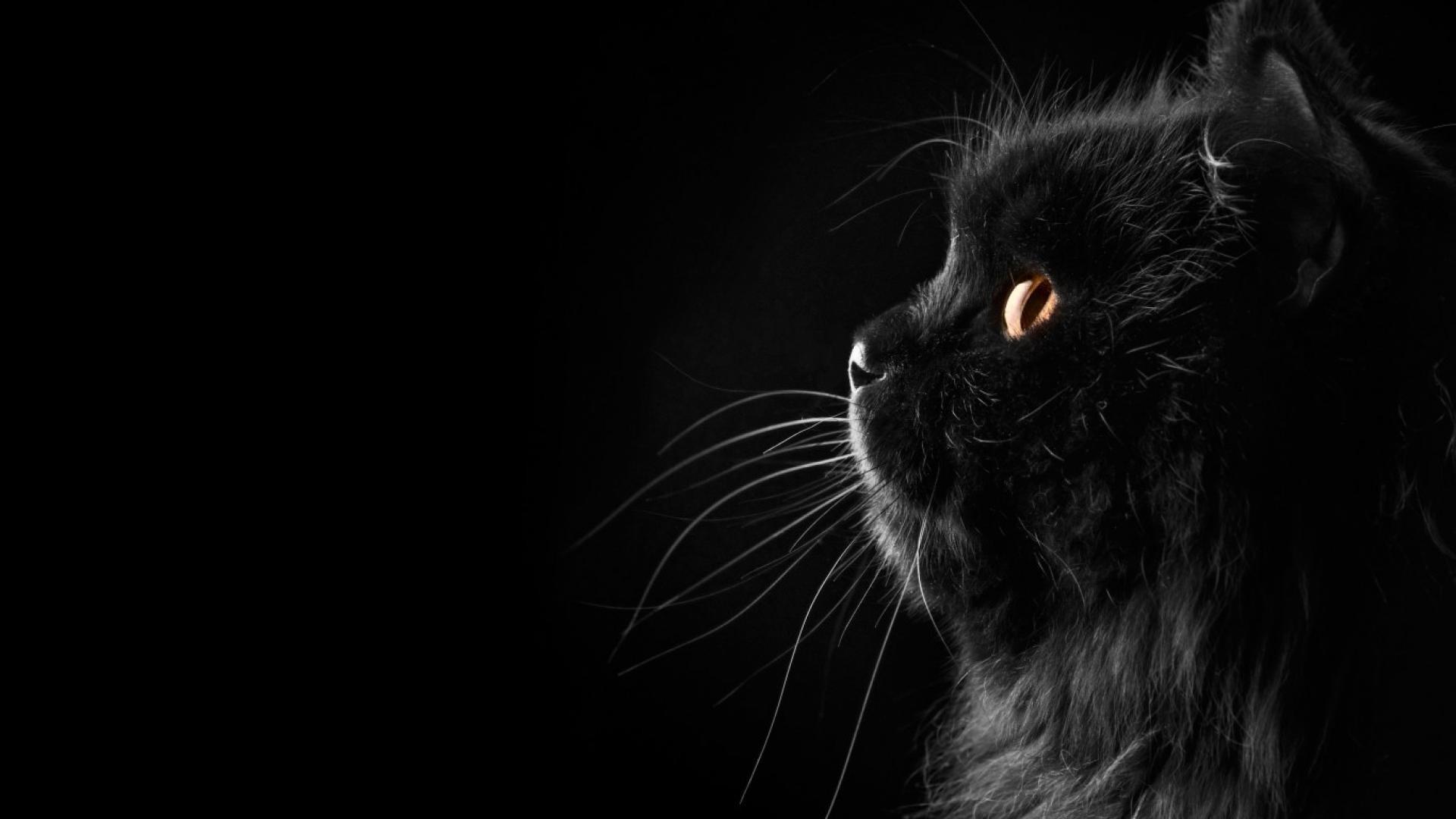 12 122055 black cat wallpaper cute black cat wallpaper hd