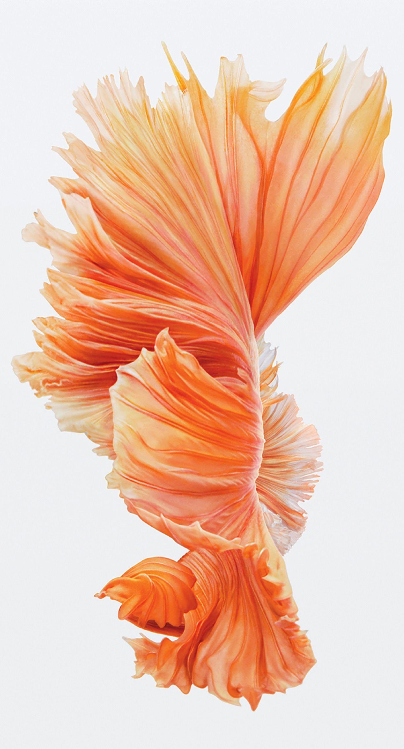 Iphone 6s Fish Wallpaper Iphone 6s Plus 124275 Hd Wallpaper