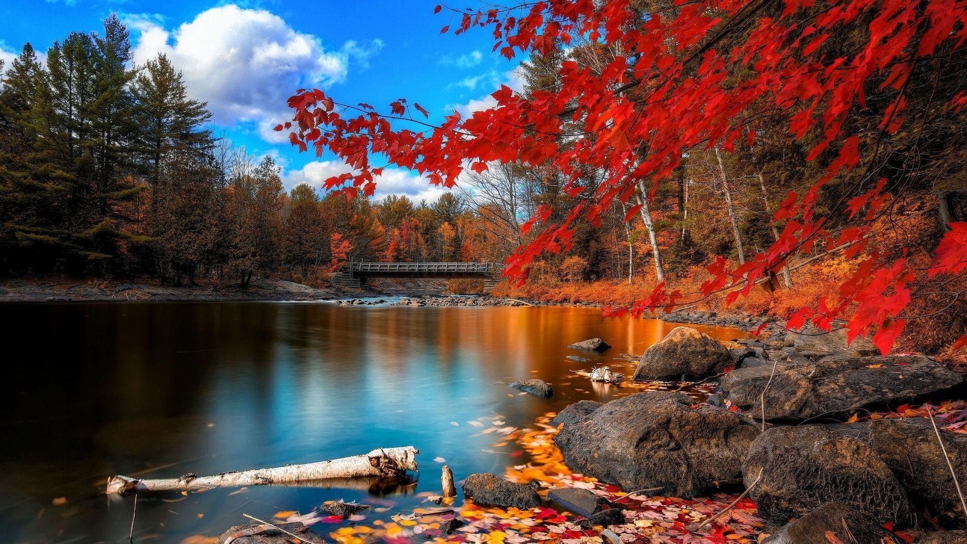 Autumn Forest Scenery Wallpaper 4k Desktop 126036 Hd Wallpaper Backgrounds Download