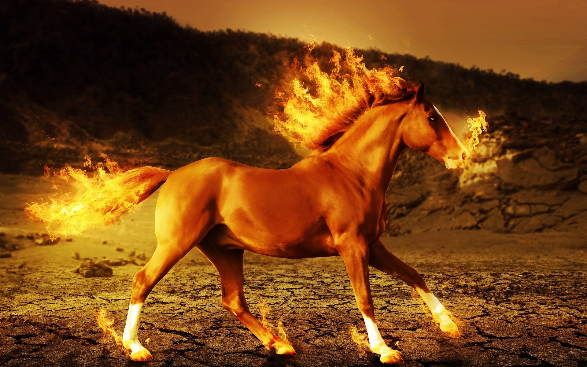 Horse Fire Wallpaper Running Horse On Fire 126954 Hd Wallpaper Backgrounds Download