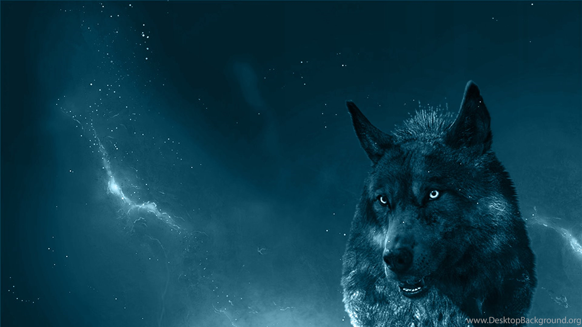 Wolf Wallpaper Download Blue Wolf 129567 Hd Wallpaper Backgrounds Download