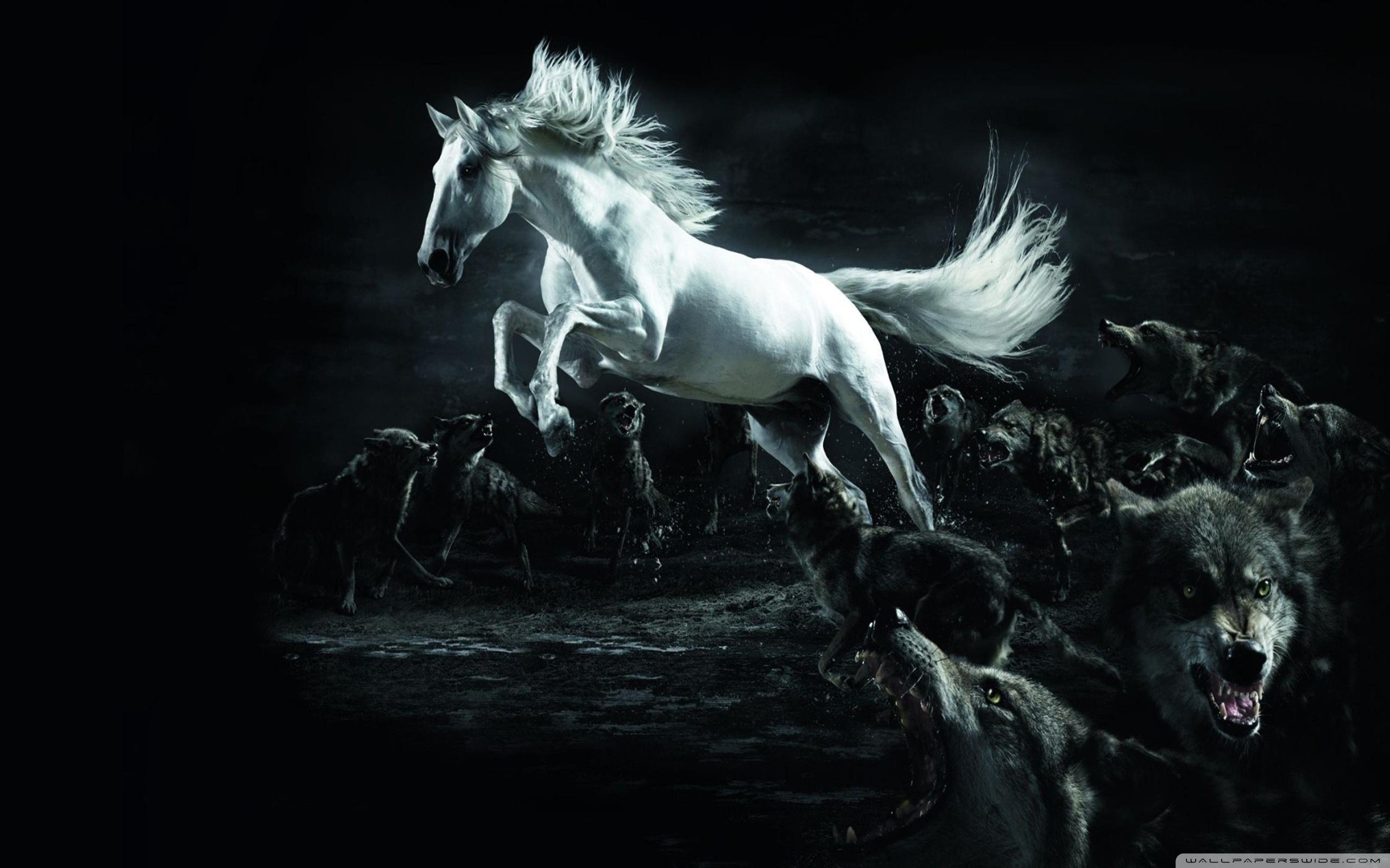 Horse Wolf Wallpaper High Definition Ultra Hd 3d Hd 129827 Hd Wallpaper Backgrounds Download
