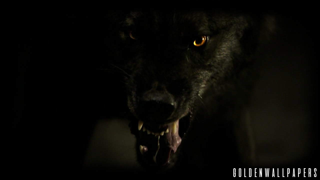 Black Wolf Wallpaper Angry Black Wolf 129875 Hd