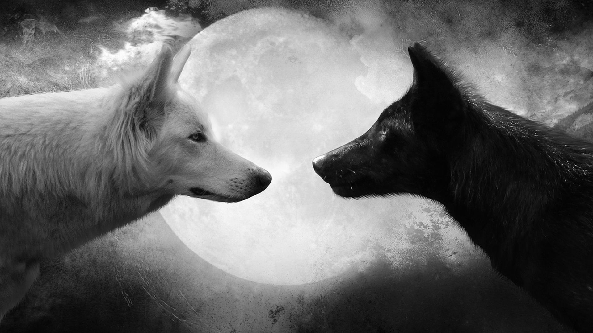 Wolf White Vs Black Wolf 129942 Hd Wallpaper Backgrounds