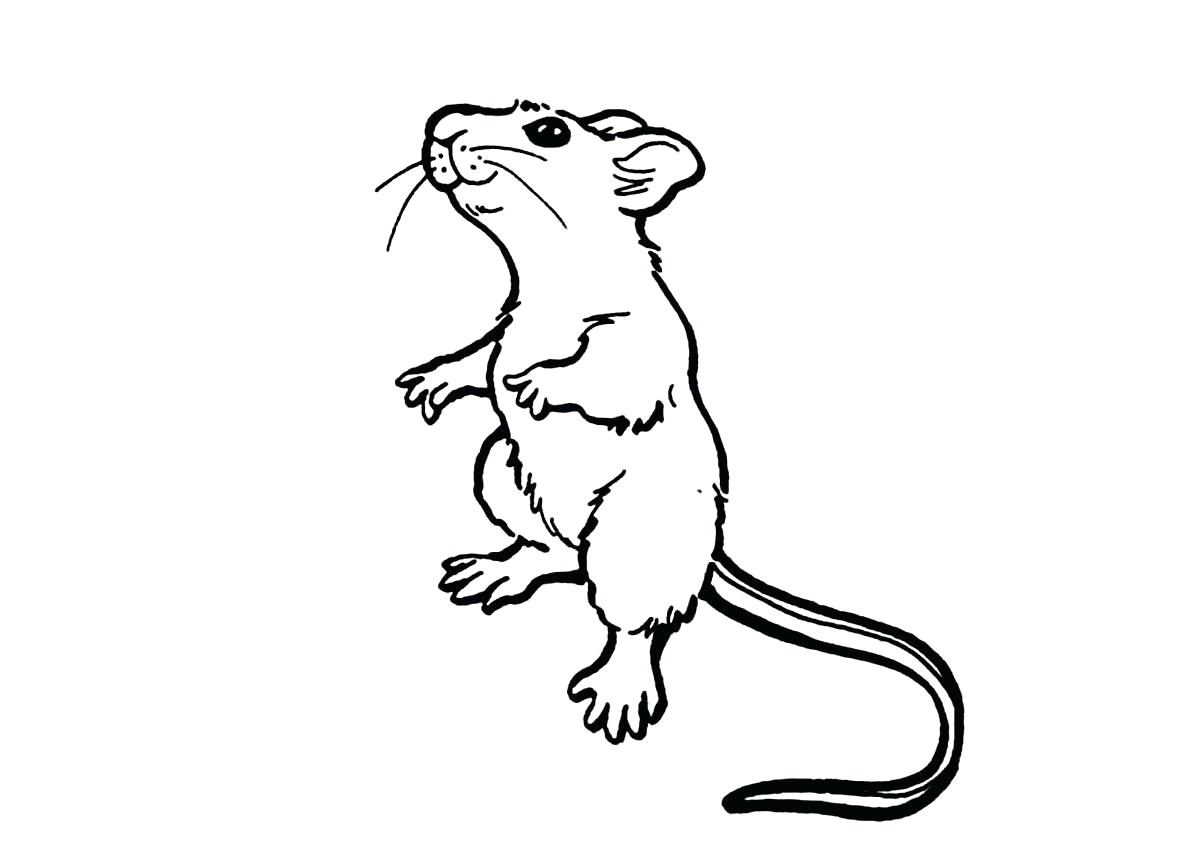 Lab Rats Coloring Pages With Wallpaper Wide Mayapurjacouture - Rat Coloring Pages Free , HD Wallpaper & Backgrounds