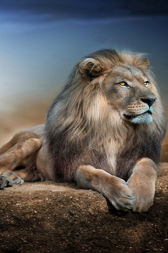 Phone Wallpaperswww Lion Wallpaper For Mobile 1214922