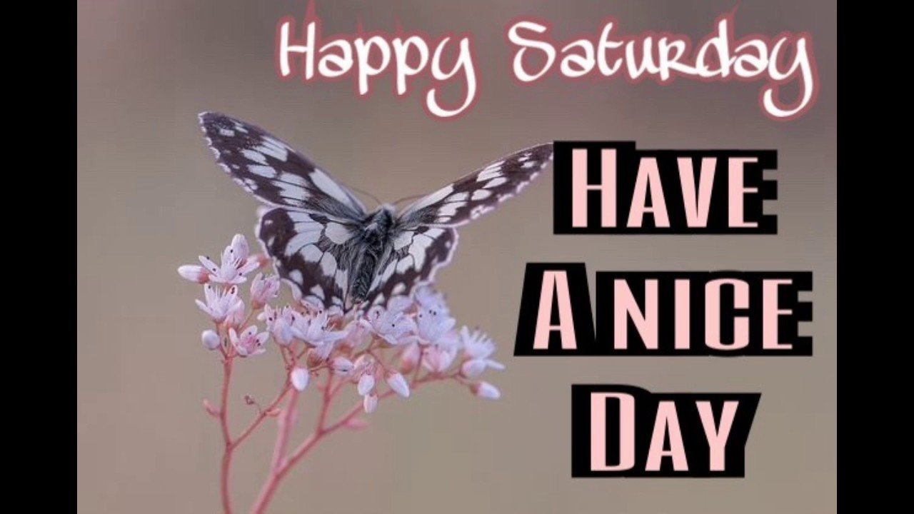 Happy Saturday Images Wallpaper Weekend Wishes - Good Morning Colourful Butterfly , HD Wallpaper & Backgrounds