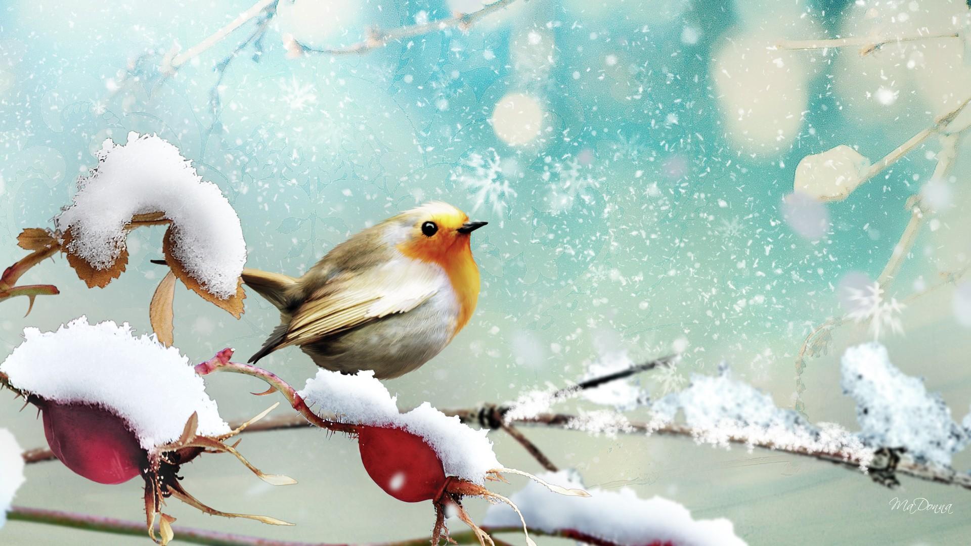 Little Winter Bird Winter Bird Desktop Backgrounds 1221639