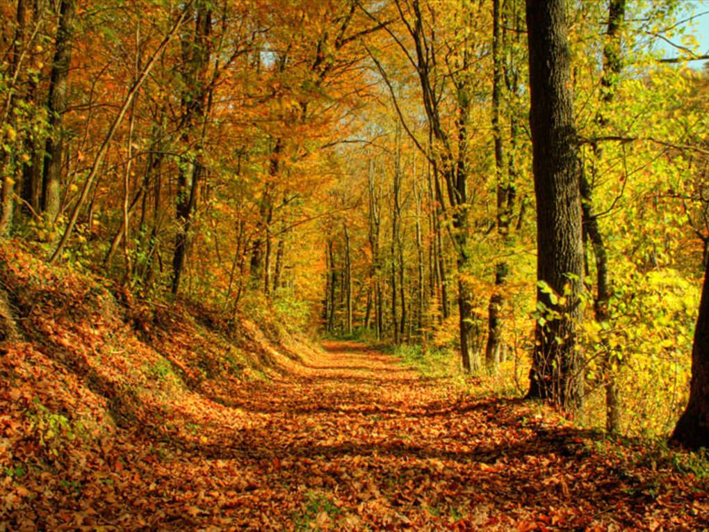 Autumn Wallpaper Ii Herbstbilder Als Hintergrund Kostenlos