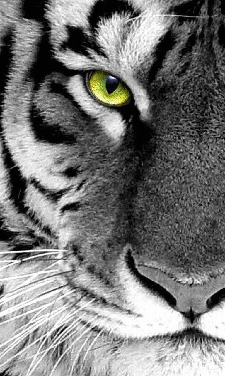 30 Wallpapers For Samsung Galaxy S6 Iphone Tiger Wallpaper Hd 1239856 Hd Wallpaper Backgrounds Download