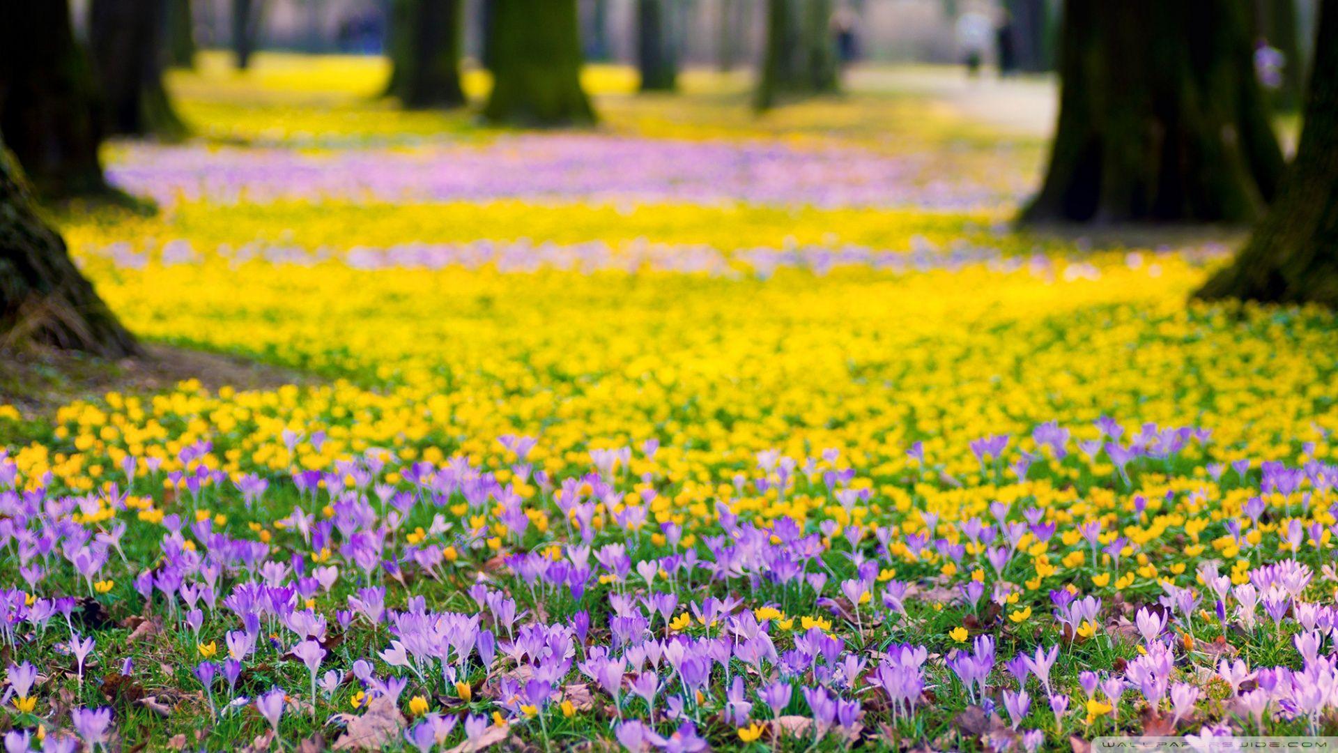 Spring Flowers Meadow Hd Desktop Wallpaper Spring Flowers
