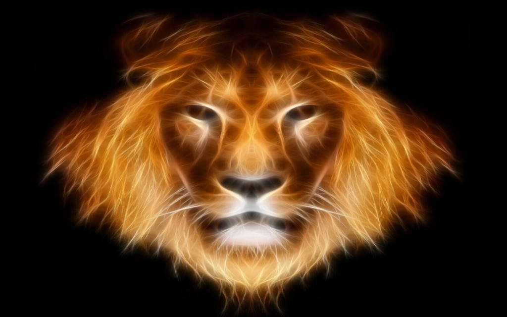 Animals Lion Leao Cute Cat Wallpapers Kitten - Lion Face , HD Wallpaper & Backgrounds