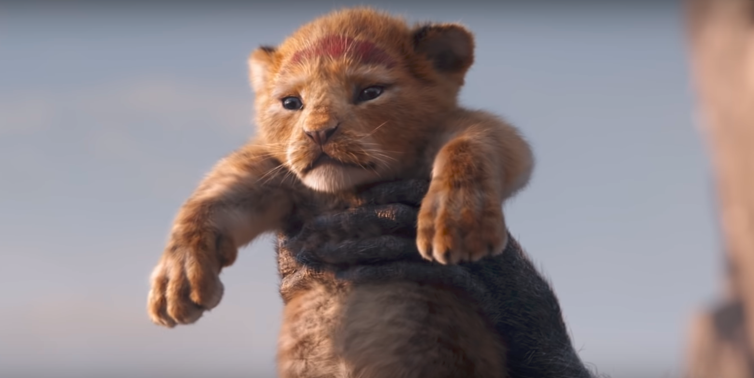 O Rei Leao Live Action - Live Action Lion King Simba , HD Wallpaper & Backgrounds